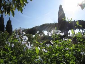 Grönska på Palatinen