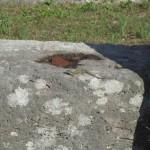 Ödla på Forum Romanum